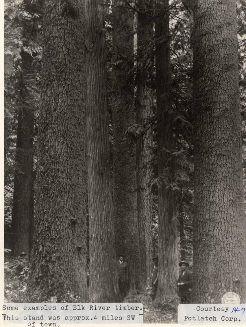 item thumbnail for Elk River Timber