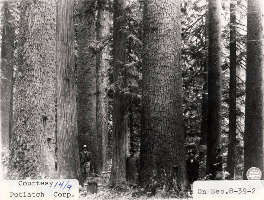 item thumbnail for Elk River Timber_3