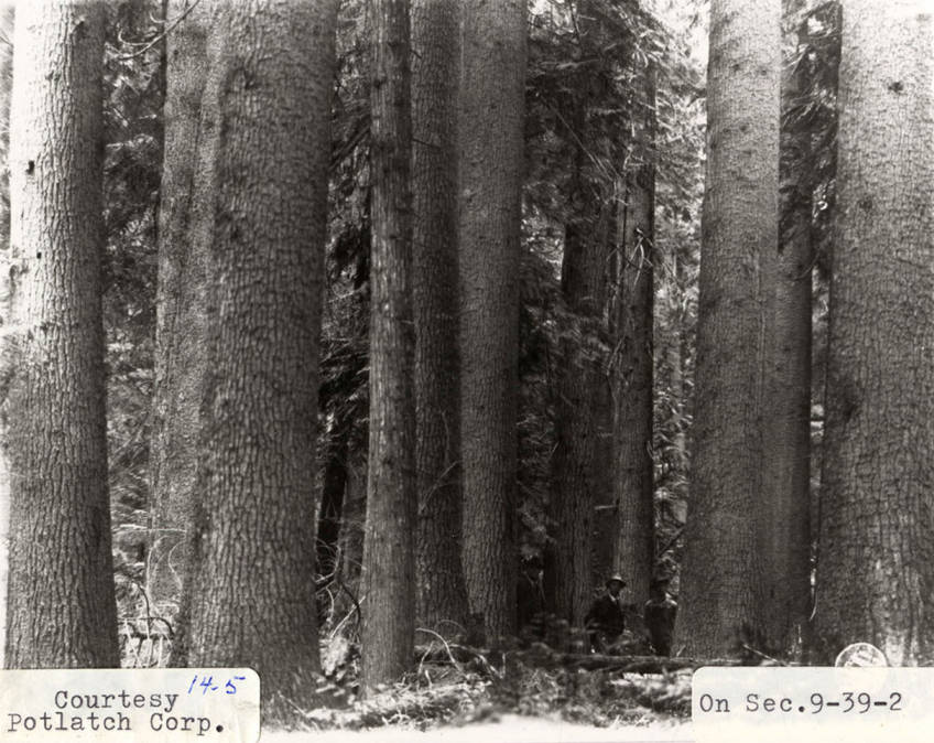 item thumbnail for Elk River Timber_4