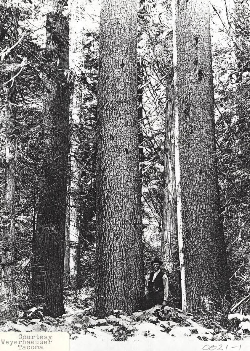item thumbnail for Elk River Timber_5