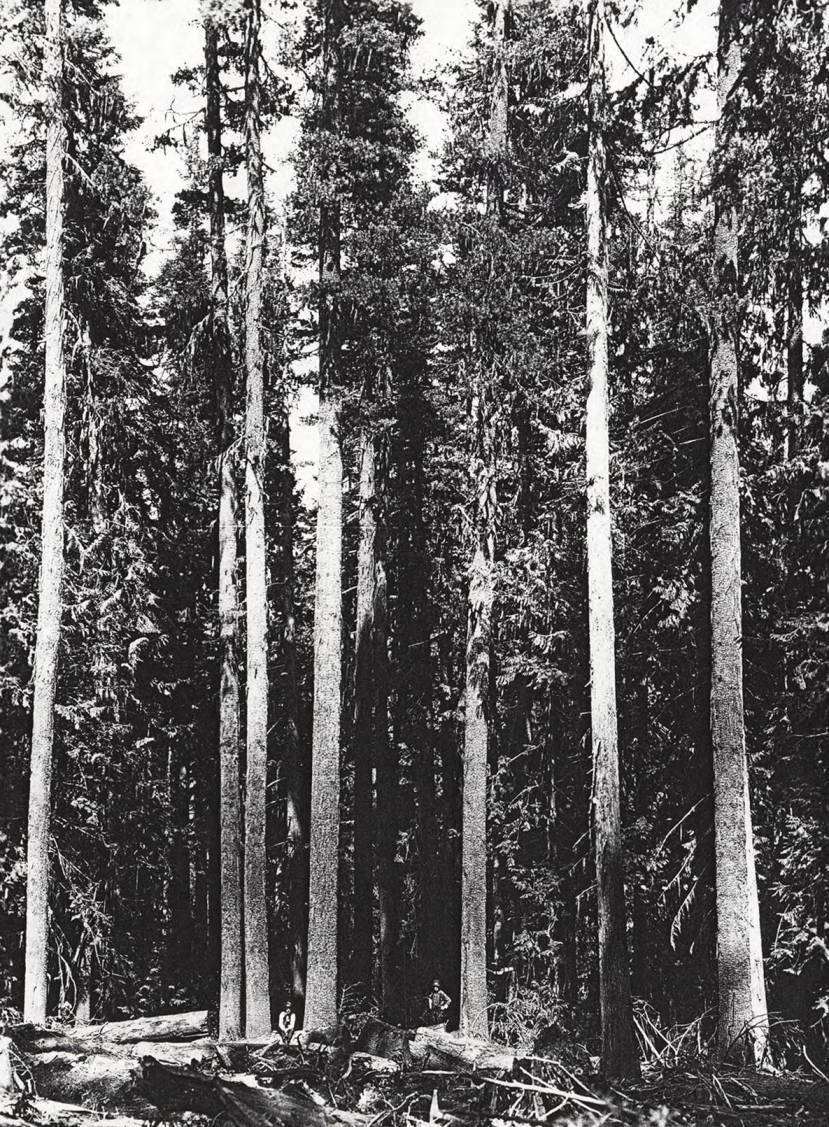 item thumbnail for Elk River Timber_6