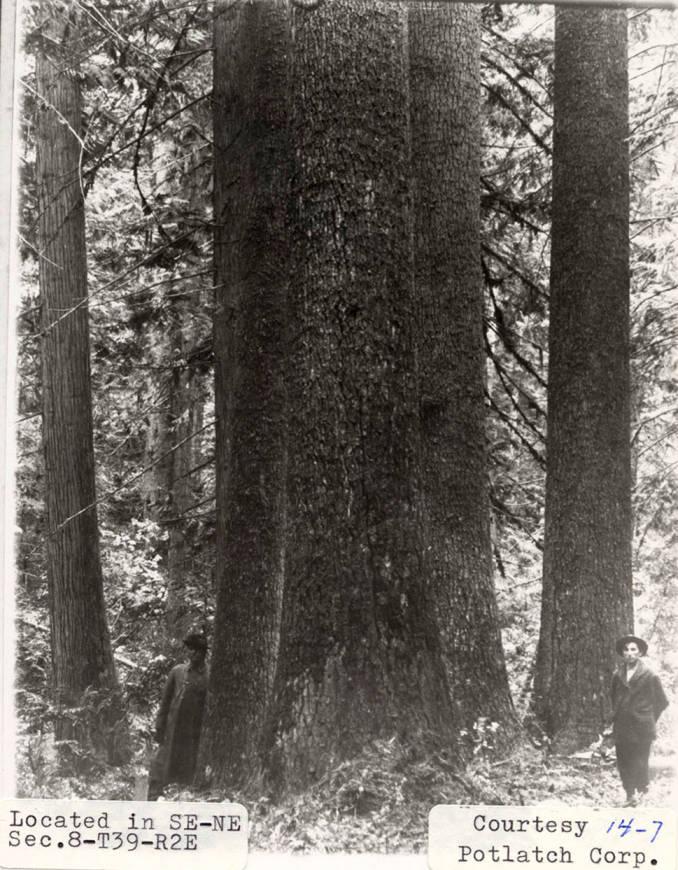 item thumbnail for Elk River Timber_10