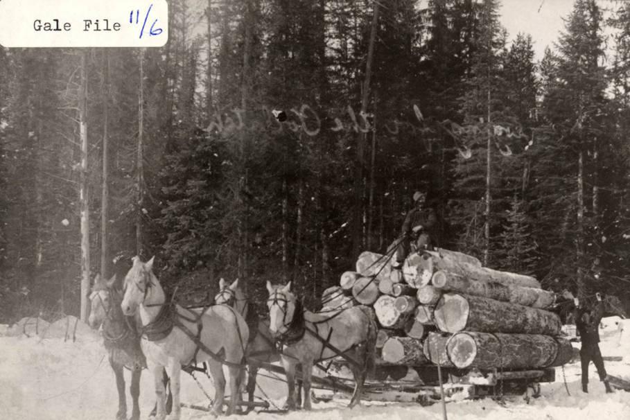 item thumbnail for Skidding Logs