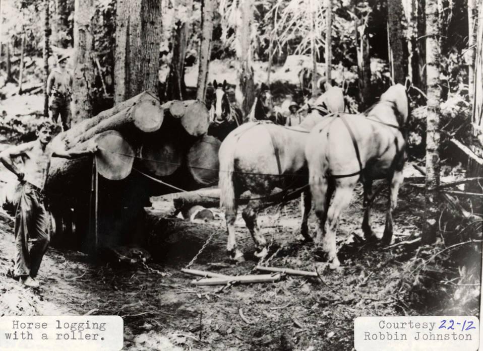 item thumbnail for Horse Logging