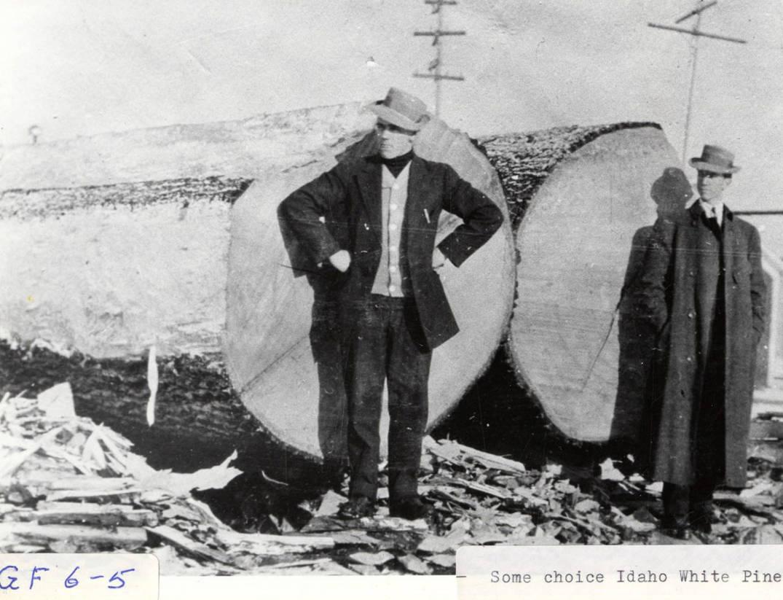 item thumbnail for Idaho White Pine