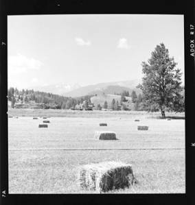 item thumbnail for Hay field, 1959 [1]