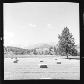 item thumbnail for Hay field, 1959 [2]