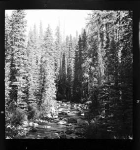 item thumbnail for Brushy Creek (Idaho), 1959