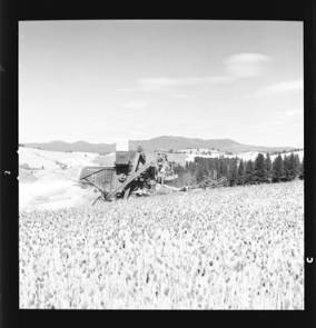 item thumbnail for Wilbur Westberg outfit harvesting on 'The Riggs Place' (Idaho),1959 [2]