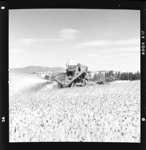 item thumbnail for Wilbur Westberg outfit harvesting on 'The Riggs Place' (Idaho),1959 [3]