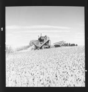 item thumbnail for Wilbur Westberg outfit harvesting on 'The Riggs Place' (Idaho),1959 [4]