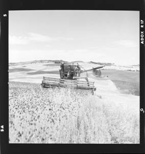 item thumbnail for Wilbur Westberg outfit harvesting on 'The Riggs Place' (Idaho),1959 [6]