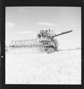 item thumbnail for Wilbur Westberg outfit harvesting on 'The Riggs Place' (Idaho),1959 [8]