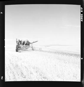 item thumbnail for Wilbur Westberg outfit harvesting on 'The Riggs Place' (Idaho),1959 [9]