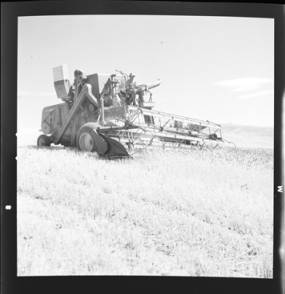 item thumbnail for Wilbur Westberg outfit harvesting on 'The Riggs Place' (Idaho),1959 [11]]