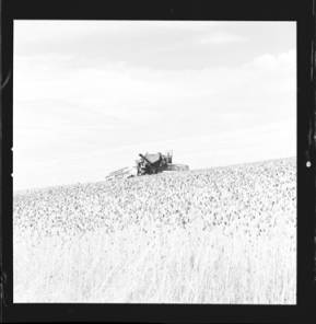 item thumbnail for Wilbur Westberg outfit harvesting on 'The Riggs Place' (Idaho),1959 [12]]