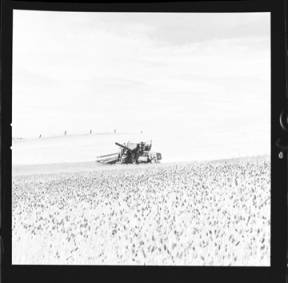item thumbnail for Wilbur Westberg outfit harvesting on 'The Riggs Place' (Idaho),1959 [13]]