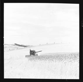 item thumbnail for Wilbur Westberg outfit harvesting on 'The Riggs Place' (Idaho),1959 [14]]