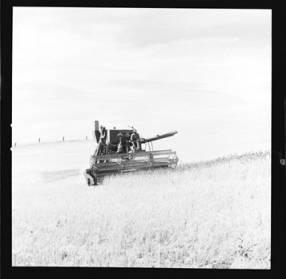 item thumbnail for Wilbur Westberg outfit harvesting on 'The Riggs Place' (Idaho),1959 [16]]