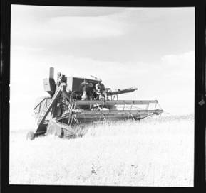 item thumbnail for Wilbur Westberg outfit harvesting on 'The Riggs Place' (Idaho),1959 [17]]