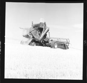 item thumbnail for Wilbur Westberg outfit harvesting on 'The Riggs Place' (Idaho),1959 [19]]