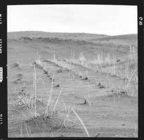 item thumbnail for Sand Dunes (Idaho), 1960 [5]
