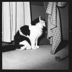 item thumbnail for Cat, 1961