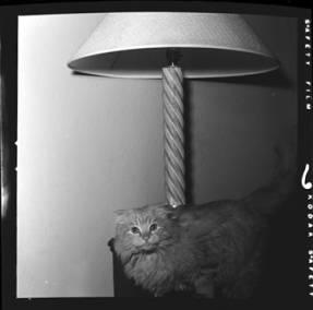 item thumbnail for Cat [1]