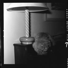 item thumbnail for Cat [2]