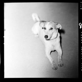 item thumbnail for Smokey (the dog) [2]