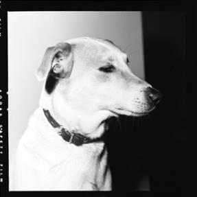 item thumbnail for Smokey (the dog) [3]