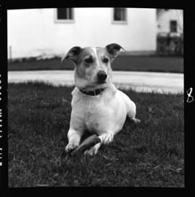 item thumbnail for Dog, 1940 [2]