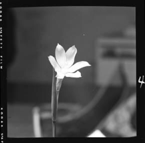 item thumbnail for Grass Widow, 1952 [5]
