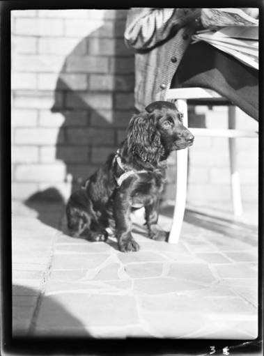 item thumbnail for Dog, 1940 [1]