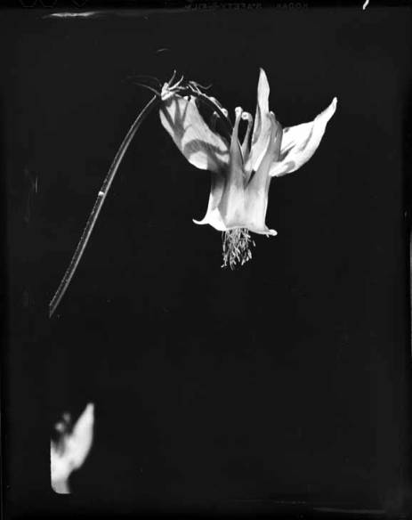 item thumbnail for Unidentified wildflower [2]