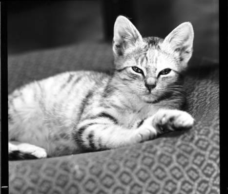 item thumbnail for Cat [3]