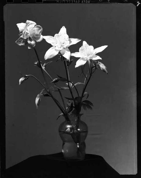 item thumbnail for Columbine flower [2]