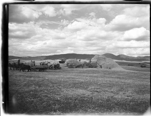 item thumbnail for Palouse region, wheat fields [3]