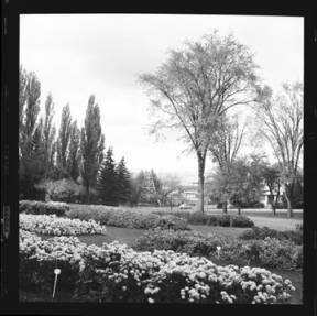 item thumbnail for University of Idaho, 1959 [3]