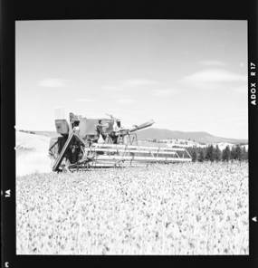 item thumbnail for Wilbur Westberg outfit harvesting on 'The Riggs Place' (Idaho),1959 [22]]