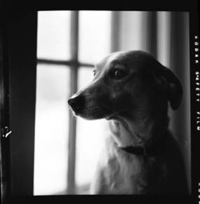 item thumbnail for Smokey (the dog) [1]
