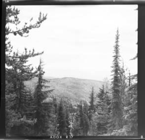 item thumbnail for Trees, 1960 [1]