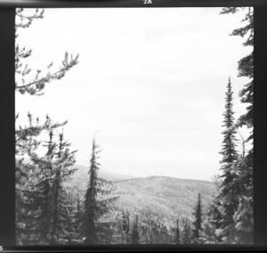 item thumbnail for Trees, 1960 [2]