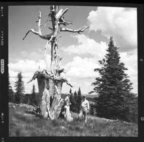 item thumbnail for Freezeout Saddle (Idaho), 1960 [1]