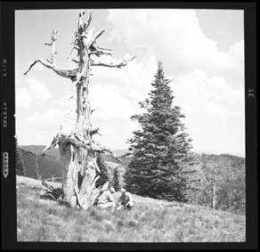 item thumbnail for Freezeout Saddle (Idaho), 1960 [3]