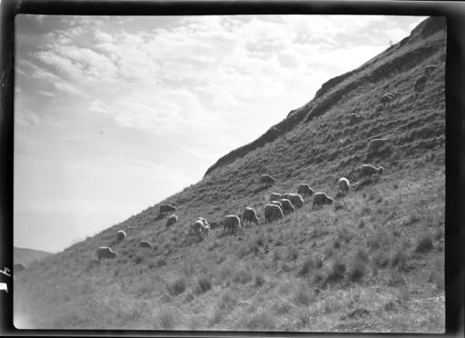 item thumbnail for Sheep (Idaho), 1939