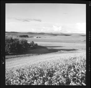 item thumbnail for Moscow (Idaho)[?], 1959 [6]