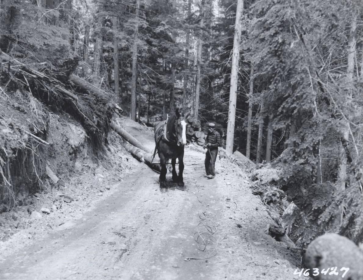 item thumbnail for Horse Skidding Logs