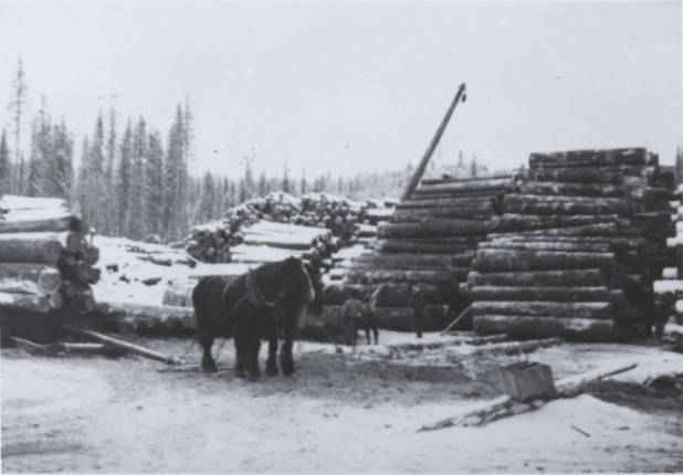 item thumbnail for Sleigh Loaded with Logs [03]