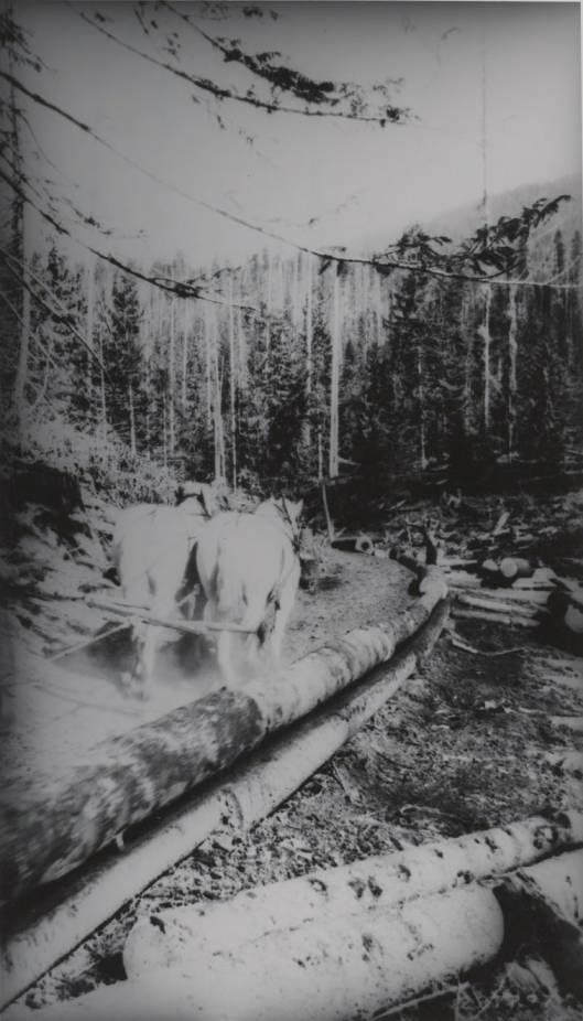 item thumbnail for Horses Trailing Logs in Chute